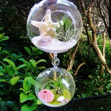 shop air plants in glass globes on wanelo