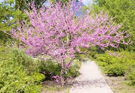 pink flower tree the 12 best flowering trees for the garden garden design
