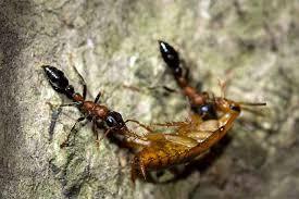 how to rid your garden of cockroaches gardener u0027s path