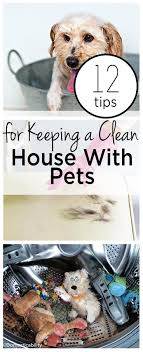 12 tips for keeping a clean house with pets clean house house