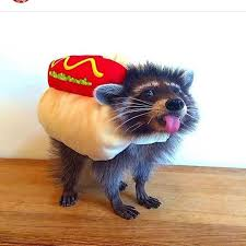 pet costumes 17 hilarious pet costume ideas for a silly