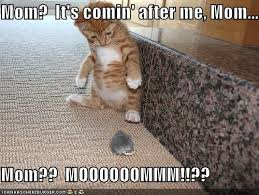 Cute Funny Cat Memes - funny cat memes that will make you lol