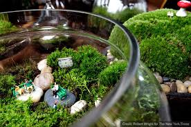 terrariums as an art form at home with kim vallee