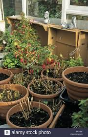 storing plants in containers garden pots in greenhouse for