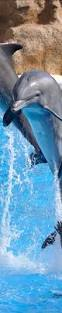 868 best dolphins images on pinterest ocean life whales and animals