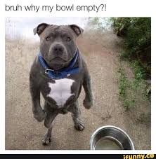 Dodg Meme - dog memes funny pictures with dogs and puppy au