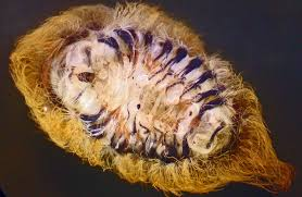 stinging apparatus puss caterpillar bugs
