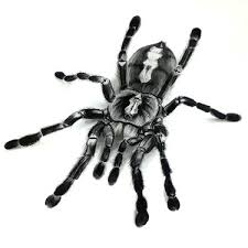 11 tarantula tattoo designs