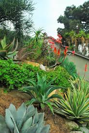 gardening with natives surfrider foundation mar vista green garden showcase december 2014