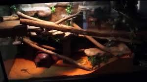 lizard terrarium with water feature youtube