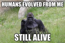 Ape Meme - humans evolved from me still alive success ape quickmeme
