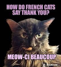 Thank You Meme Funny - she cat jokes pretty kitty riddles funny cat memes fashionable