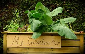 The Proper Way To Make A Bed How To Build Raised Garden Beds Tips For Raised Bed Gardening