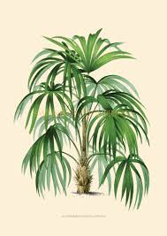 Home Decor Trees by Vintage Illustration Of A Tropical Palm Tree Beach Style
