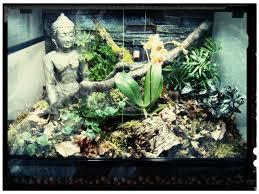 setting up a vivarium for a pygmy chameleon youtube