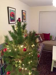 christmas decoration at home our heath to your front room pull a pine at farnham south east