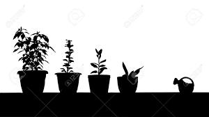 indoor gardening images u0026 stock pictures royalty free indoor