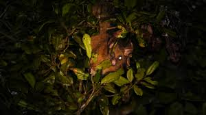 top 10 night safaris when the wildlife freaks come out u2013 cool