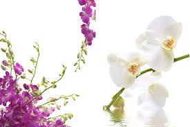 flower orchid mariageenvue themes inspiration of flowers the orchid