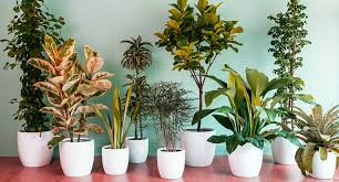 best indoor plants for low light good indoor plants low light best indoor plant 5 best low light