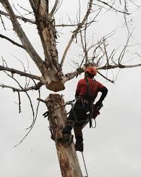 boise tree service a tree company