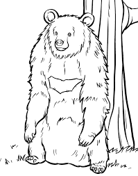 book bear colouring pages coloring