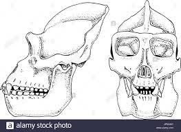 monkey skeleton diagram anatomy monkey skeleton labeled wiring
