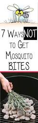 Things In A Backyard 7 Ways Not To Get Mosquito Bites A Woman U0027s Life