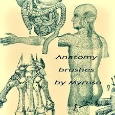 Human Anatomy Images Free Download Anatomy Brushes Photoshop Brushes In Photoshop Brushes Abr Abr