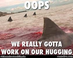 Funny Shark Meme - the misunderstood shark meme comediva