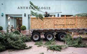 arrival of 90 foot tall christmas tree marks start of holiday