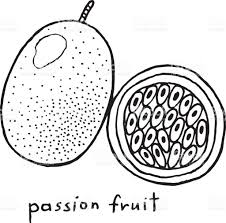passion fruit coloring page graphic vector black and white art for