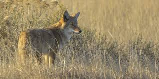 Kansas wildlife images Wildlife watching chase county kansas find yourself here jpg