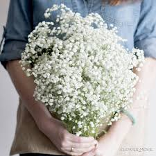 baby s breath flowers baby s breath flower moxie