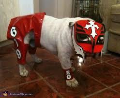English Bulldog Halloween Costumes 73 Perfect Pet Costumes Images Pet Costumes
