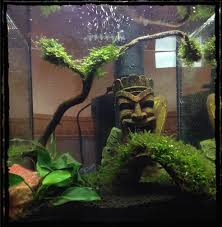 How To Aquascape A Planted Tank Aquascaping U2013 My First Planted Tank For Shrimp Criptic Thoughts