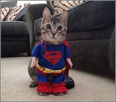 Cat Halloween Costumes Cats 111 Dressed Kitties Images Animals Cats