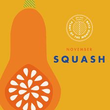 plant of the month club november plant of the month club squash murnane