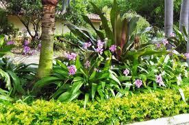 great tropical landscape design tropical garden design tropical