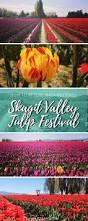 Skagit Valley Tulip Festival Bloom Map Best 25 Tulip Festival Ideas On Pinterest Tulip Fields World