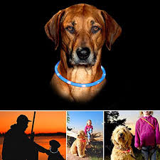 Light Up Dog Collar Dog Collar Itery Led Usb Rechargeable Pet Safety Collar
