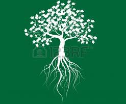 tree branch with green leaves white background vector