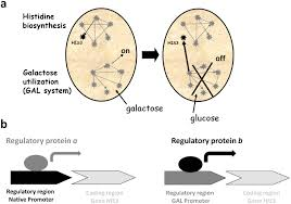 the unforeseen challenge from genotype to phenotype in cell