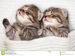 sleeping baby kitten stock images image 35689864
