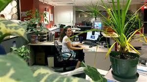 plantes bureau les bienfaits des plantes vertes au travail ici radio canada ca