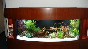 fascinating modern fish tank decorations pictures ideas tikspor
