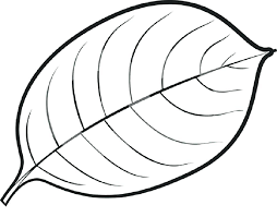 coloring pages of leaf shapes coloring page leaf coloring page leaf leaves coloring pages leaf