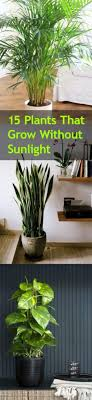 plants that don t need sunlight to grow 15 plants that grow without sunlight bless my weeds
