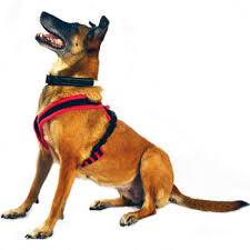 Comfort Flex Dog Harness Eezwalker Dog Harness