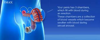 tentang vimax canada obat pembesar penis